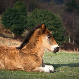 Ponies, alpacas and pamper packages